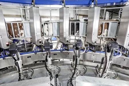 Однозадачный робот - подготовка и промывка сосков DeLaval AMR
