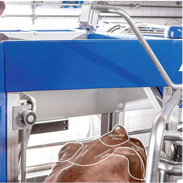 Система определения упитанности коров DeLaval BCS Укрепляет здоровье коров
