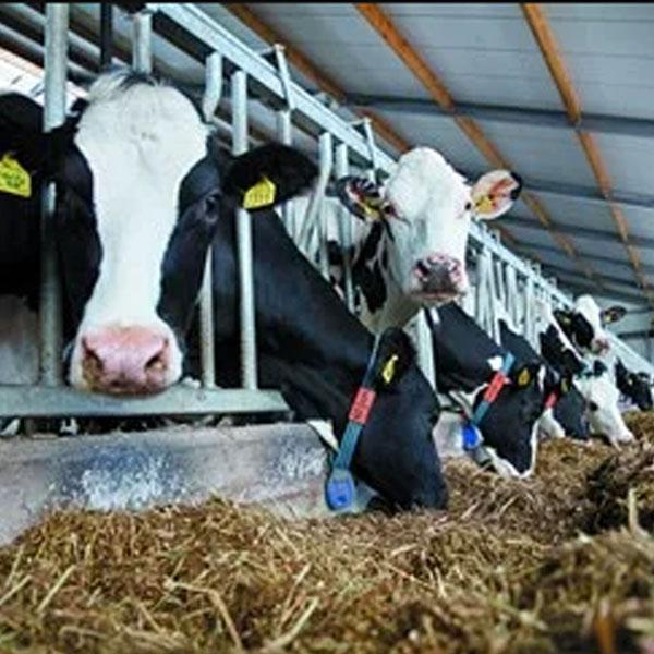 Система определения упитанности коров DeLaval BCS Точное кормление