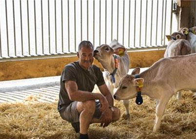 Система определения упитанности коров DeLaval BCS Улучшает воспроизводство