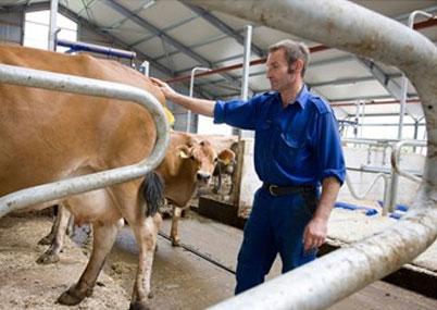 Система определения упитанности коров DeLaval BCS Снижает трудозатраты