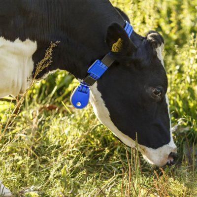 Система мониторинга активности коров