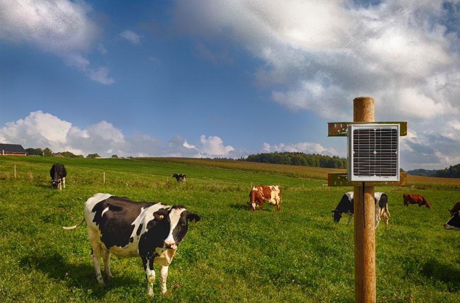 Система мониторинга активности коров в стаде