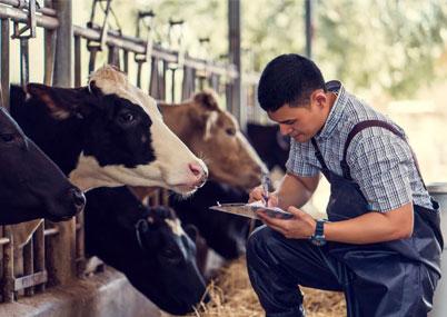Консалтинг животноводческих ферм
