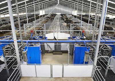 планирование новых ферм компания молочный выбор
