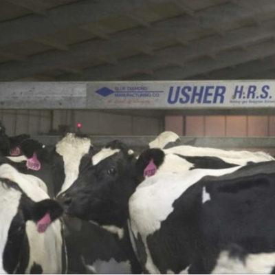 Подгонщик коров USHER