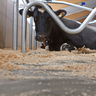 Маты и матрасы для коров